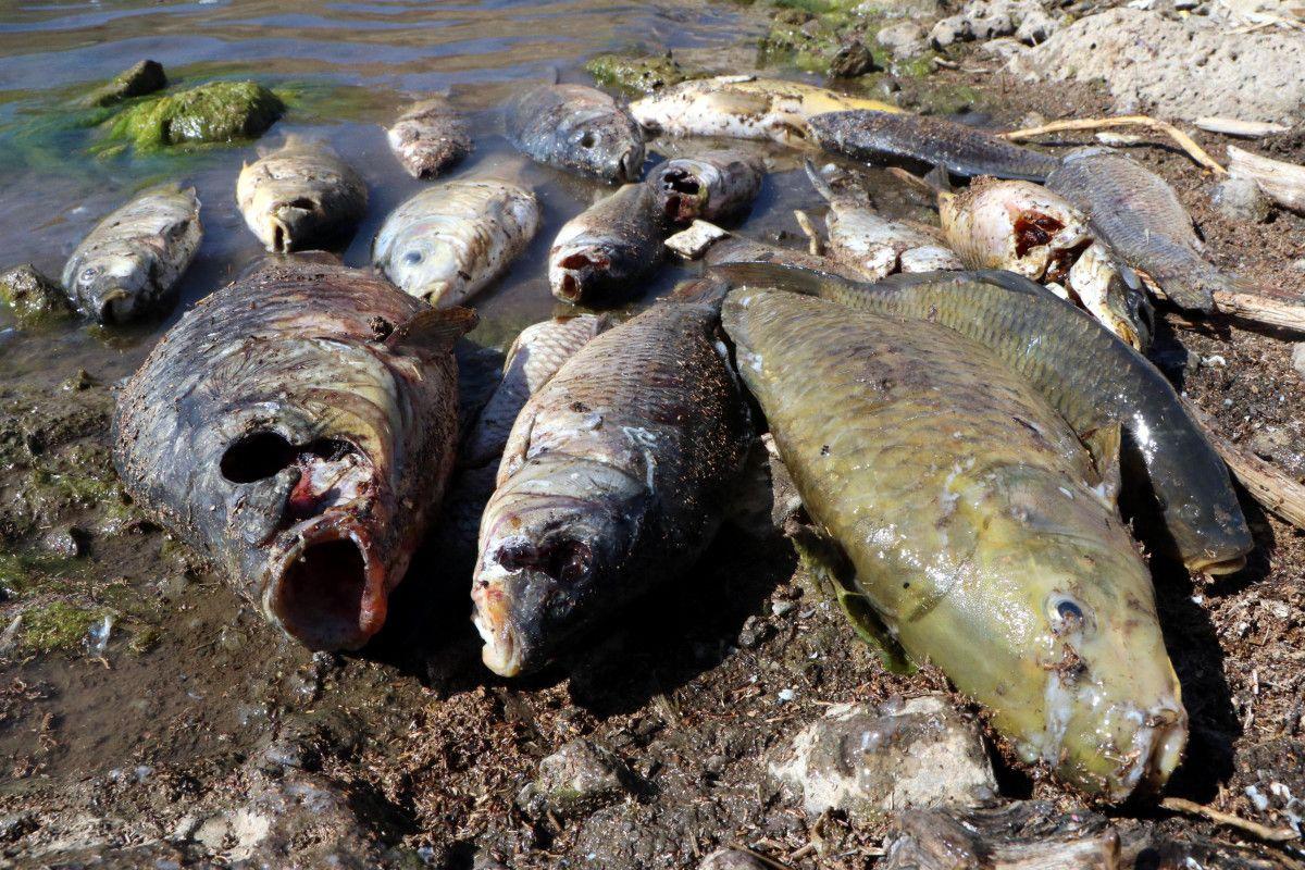 Van daki ani balık ölümlerinin nedeninin  şok  olduğu belirlendi #1