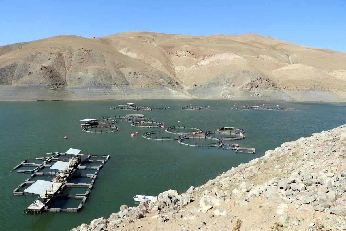Van daki ani balık ölümlerinin nedeninin  şok  olduğu belirlendi #2