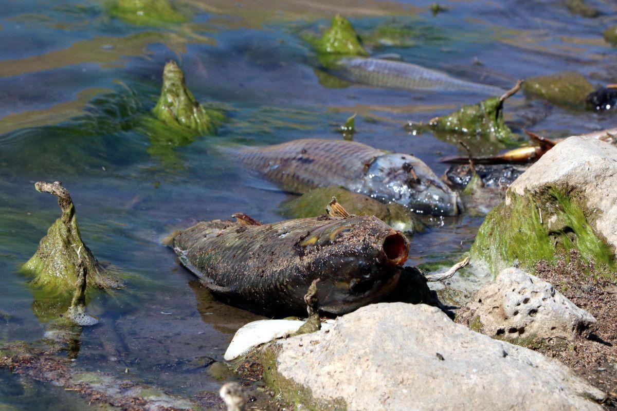 Van daki ani balık ölümlerinin nedeninin  şok  olduğu belirlendi #3