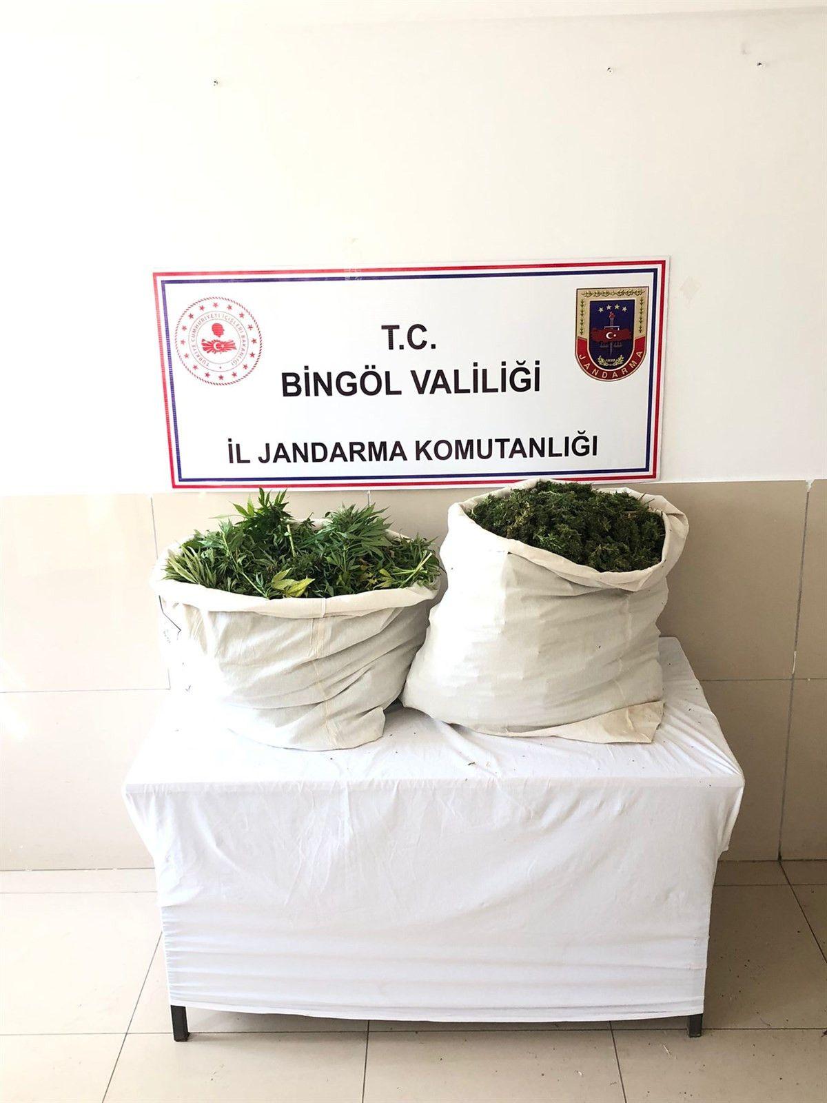 Bingöl'de bin 100 kök kenevir ve 21 kilo esrar ele geçirildi #1