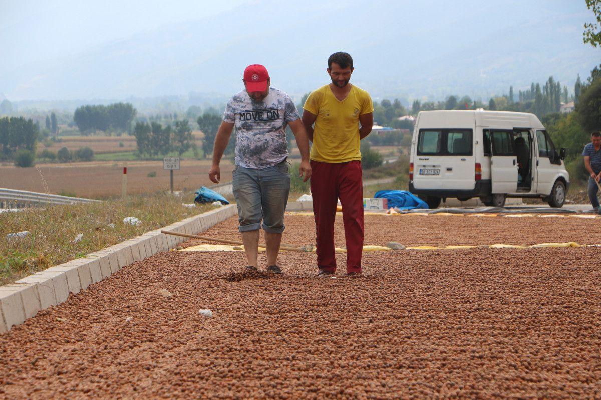 Ordu daki fındıklar, yağış nedeniyle Tokat ta kurutuluyor #5