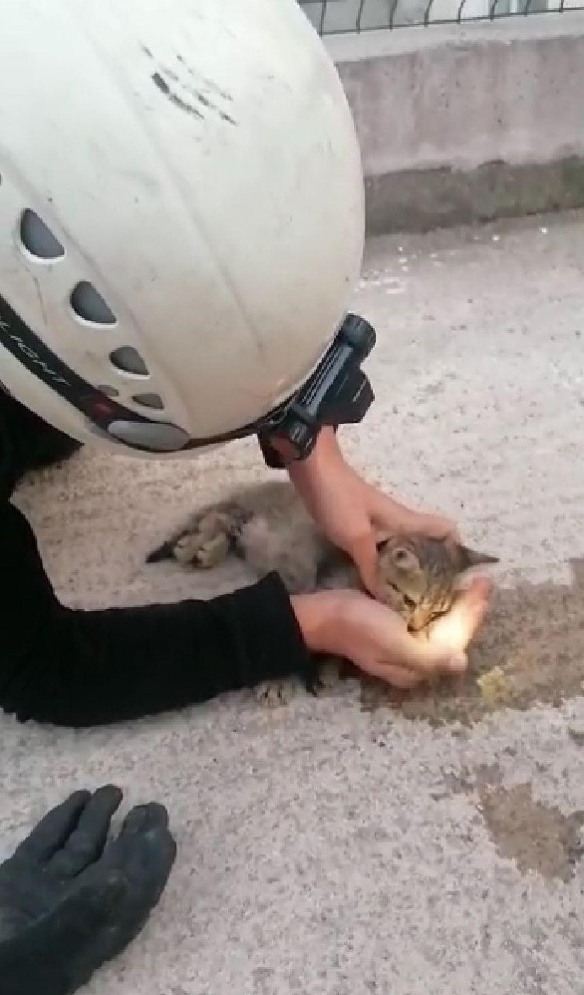 Kocaeli de kalbi duran kedi masajla kurtarıldı #1