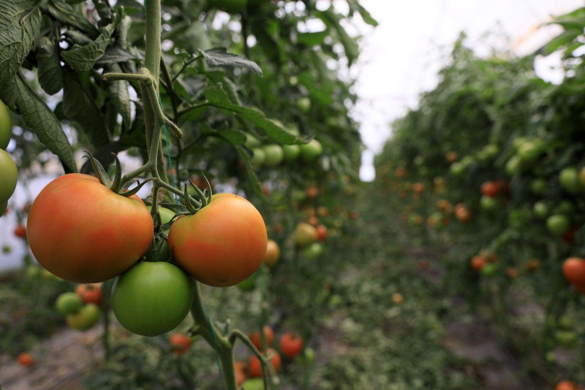 Antalya da seradan markete 5 kilometrede yüzde 176 fiyat artışı #2