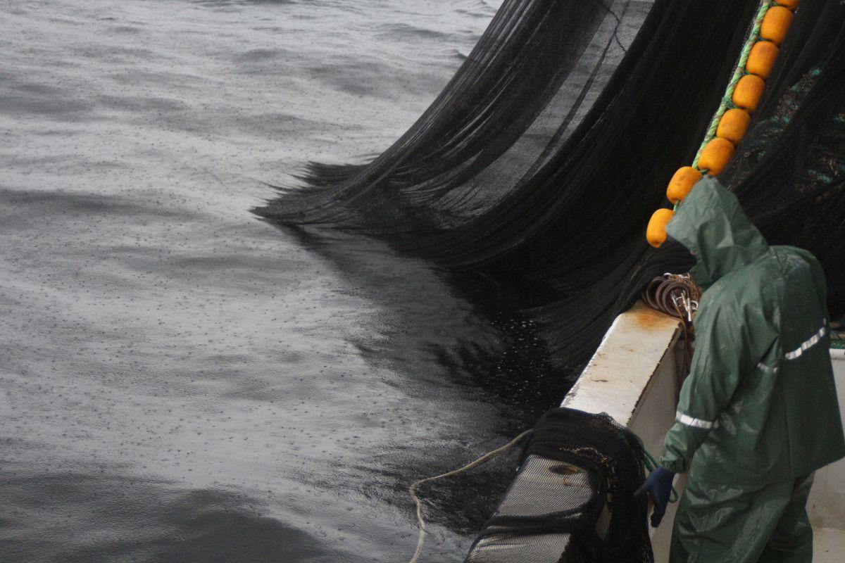 Artvin de balıkçılar için palamut heyecanı başladı #10