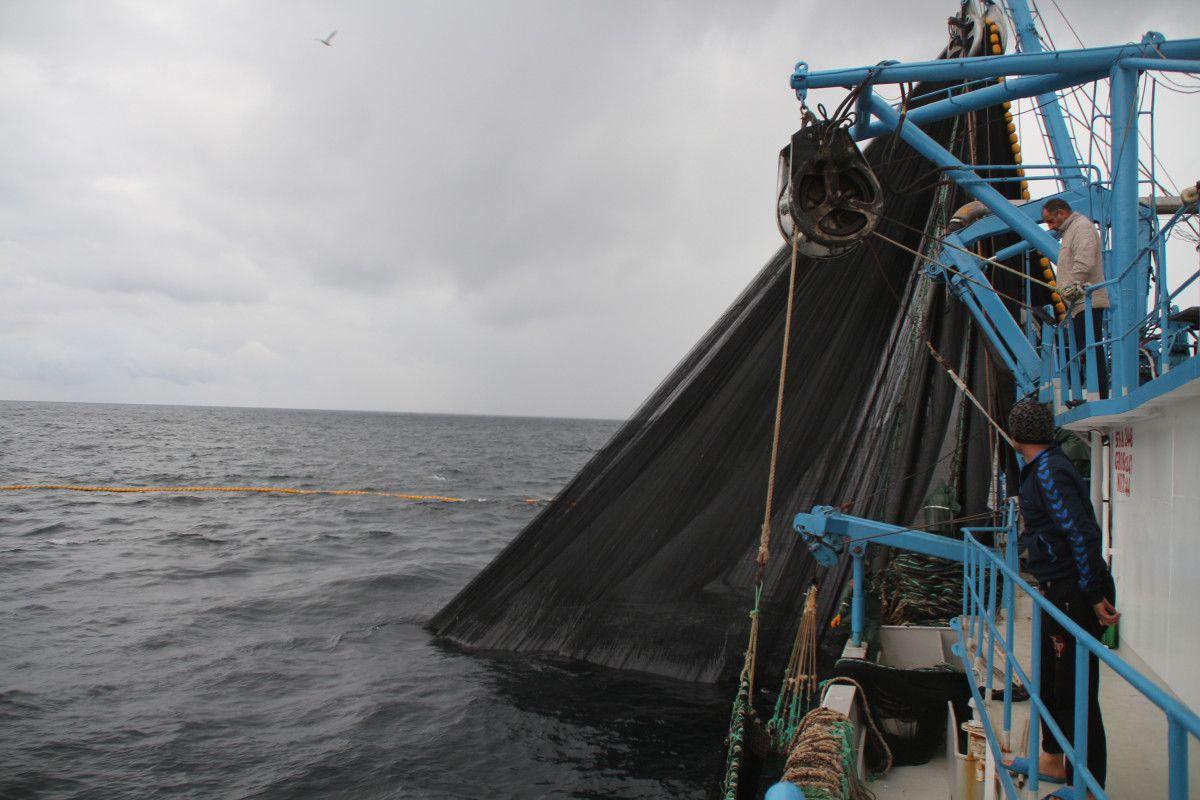 Artvin de balıkçılar için palamut heyecanı başladı #7
