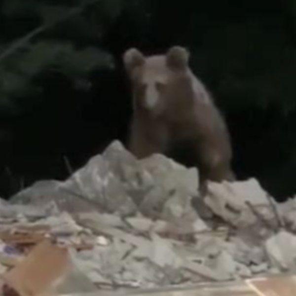 Artvin'de, evin kapısına gelen ayı görüntülendi