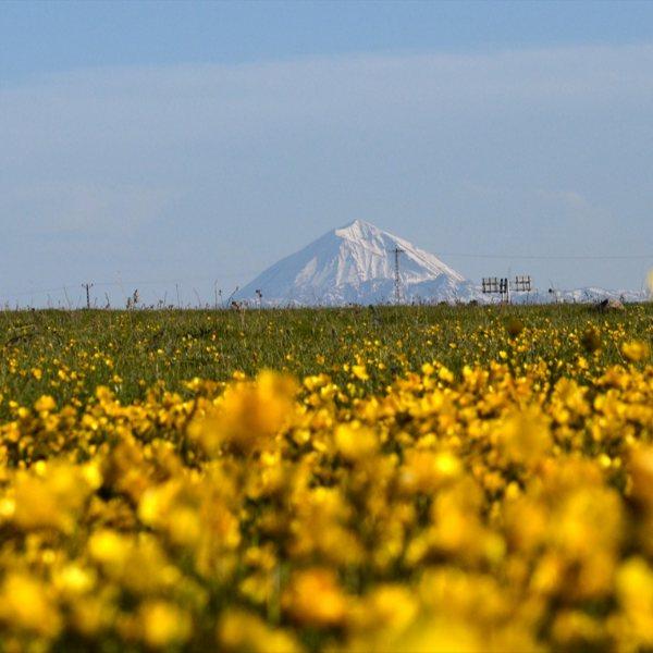 Sarıkamış'ta baharın güzelliği yaşanıyor