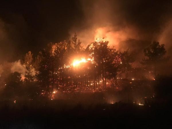 Mersin'de ağaçlık alanda yangın