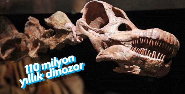 Arjantin'de yeni bir dinozor türü bulundu