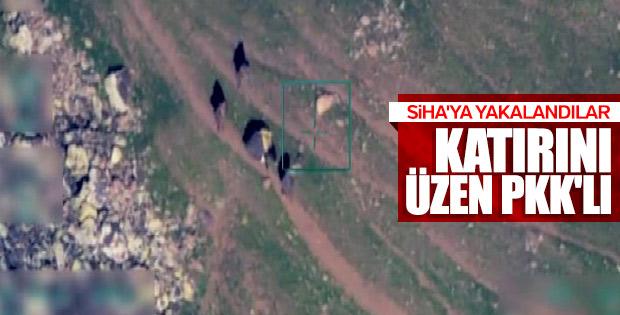 PKK'lı teröristler hayvanlara da zulmediyor