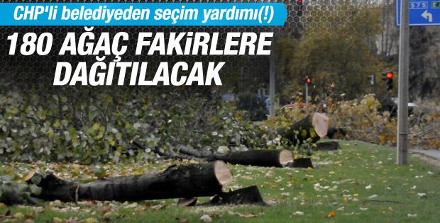 Yalova'da kesilen ağaçlar ihtiyaç sahiplerine dağıtılacak
