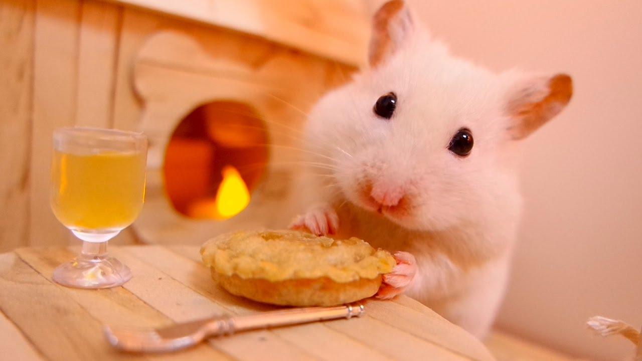 hamster yemi