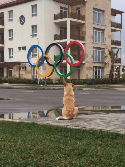 Rusya'da yeni olimpiyat skandalı: Köpekleri zehirleyin