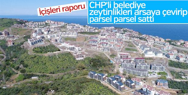 CHP'li Mudanya Belediyesi zeytinlikleri arsaya dönüştürdü