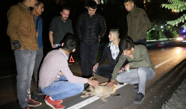 Yozgat'ta bacakları kırılan köpeğe gençler yardım etti