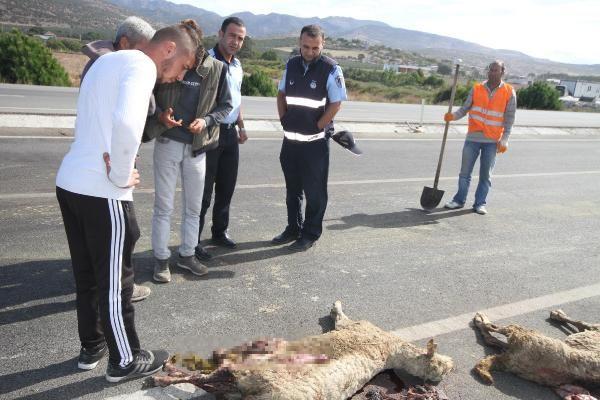 Otobüs sürüye çarptı, gebe koyunlar öldü