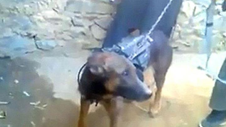 Taliban İngiliz Ordusu'nun köpeğini esir aldı