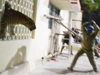 Hindistan'da şehre inen bir leopar nedeniyle hayat durdu - izle