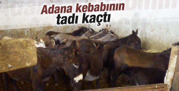 Adana'da at ve eşek eti operasyonu