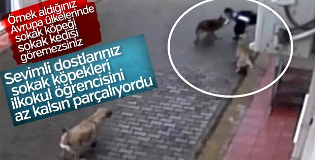 Bursa'da aç kalan köpekler 12 yaşındaki çocuğa saldırdı