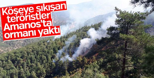 Teröristler Amanos'ta ormanı ateşe verdi