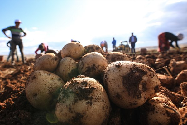Malatya'da 3 yerli ve milli tohumun ekimi yapıldı