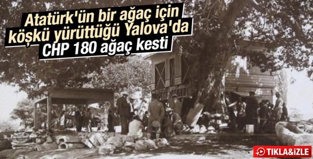 Atatürk Yalova'daki ağacın kesilmesini engellemişti