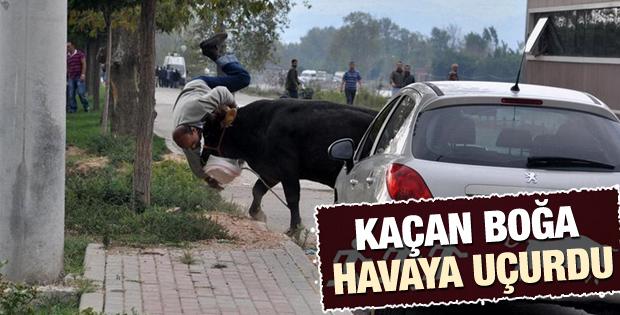 Bursa'da kaçan boğa 3 kişiyi yaraladı