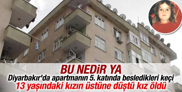 Diyarbakır'da bir keçi 5 katlı binanın çatısından atladı