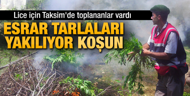 Diyarbakır'da 1000 kişiyle uyuşturucu operasyonu