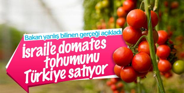 Türkiye İsrail'e domates tohumu ihraç ediyor