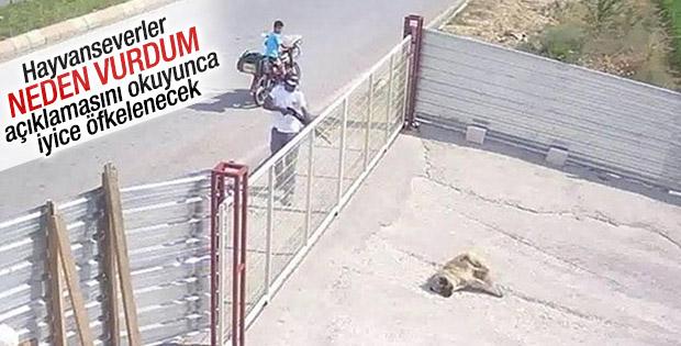 Edirne'de köpeği pompalı tüfekle vuran adam konuştu