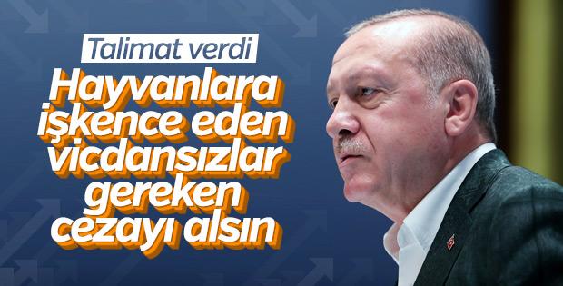 Başkan Erdoğan'dan hayvan hakları yasası talimatı