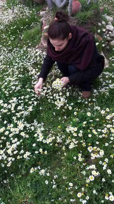 Yalancı bahar geldi ağaçlar çiçeklendi