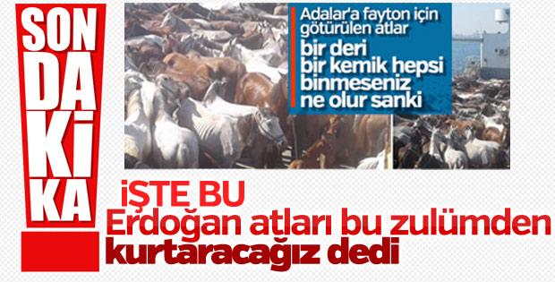 Cumhurbaşkanı: Adalar'da atlar faytonda kullanılmayacak
