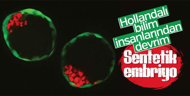 Bilim insanları sentetik embriyo üretti