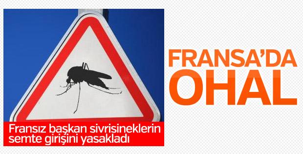 Fransızlar kente sivrisinek girişini yasakladı