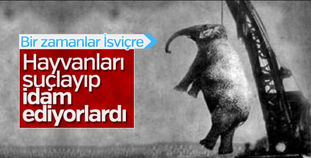 Avrupa'da hayvan idamı