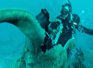 Dev ahtapotun fotoğrafçı ile güreşi -izle