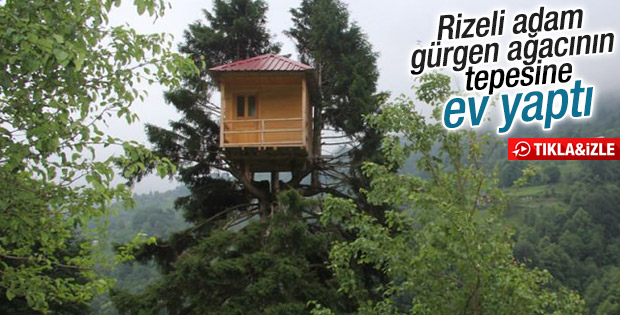 Rizeli gürgen ağacının tepesine ev yaptı