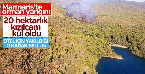 Muğla'da kızılçam ormanı yangını