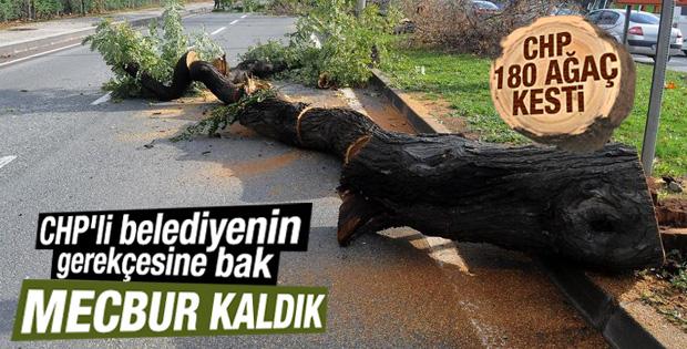 Yalova Belediyesi'nden ağaç kesme açıklaması