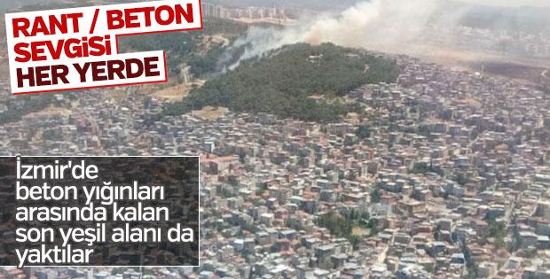 İzmir'deki yangınlar yüzlerce hektarlık alanları kül etti