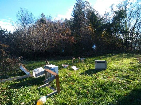 Kastamonu'da ayılar arı kovanlarına saldırdı