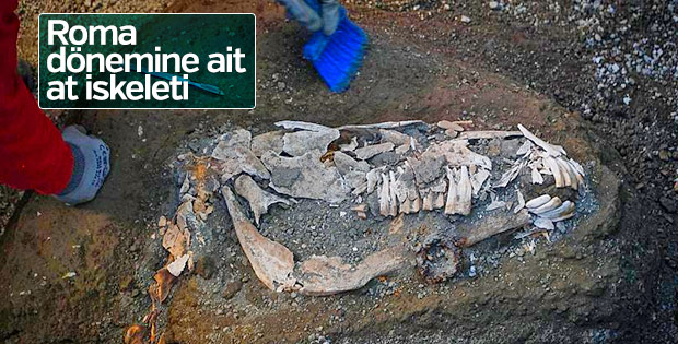 Pompei'de Roma dönemine ait at iskeleti bulundu