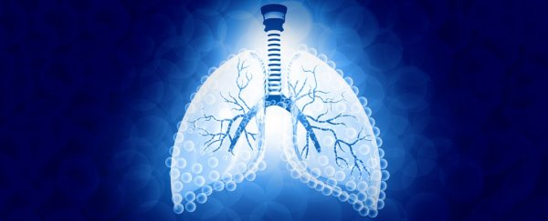 Akciğere benzeyen yeni bir cihaz, suyu yakıta dönüştürüyor