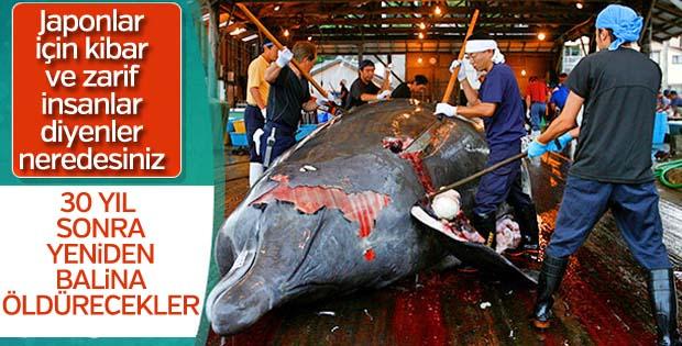 Japonya, balina avcılığını serbest bırakıyor