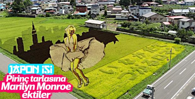 Japon tarlalarında pirinç çeltik sanatı