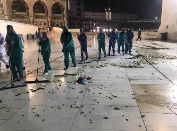 Mekke'ye böcek istilası