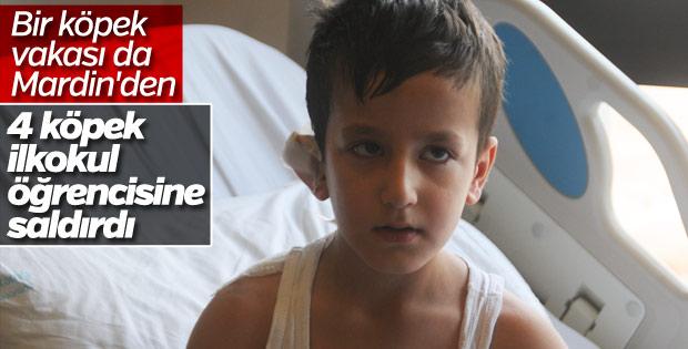 Mardin'de 4 köpek 7 yaşındaki çocuğa saldırdı